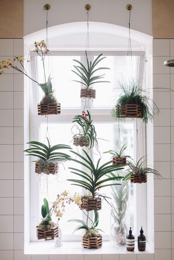 pokojové rostliny okno orchidea