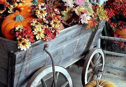 TOP podzimní květy v zahradě