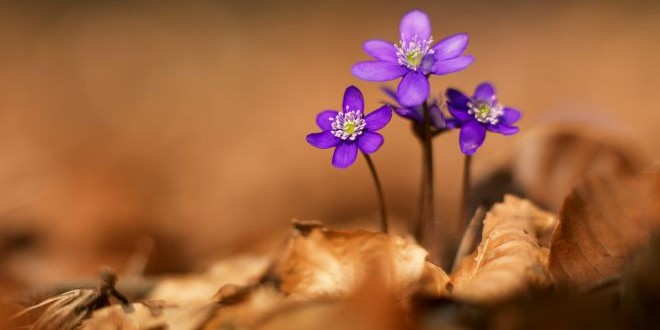 Jarní květiny – fotogalerie prvních květů jara