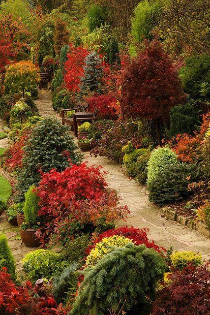 podzimní květy na zahradě