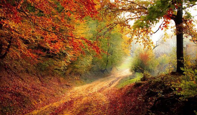 barvy podzimu v interiéru