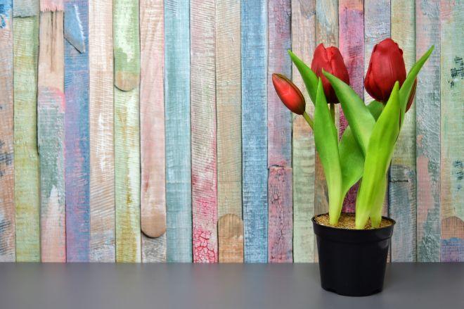 Tulipány jako jarní výzdoba