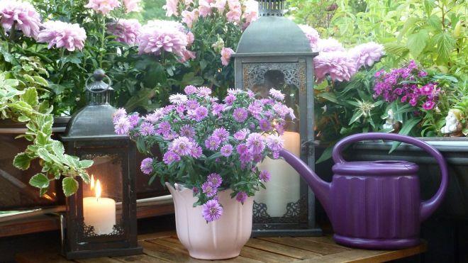 balkonové květiny rady