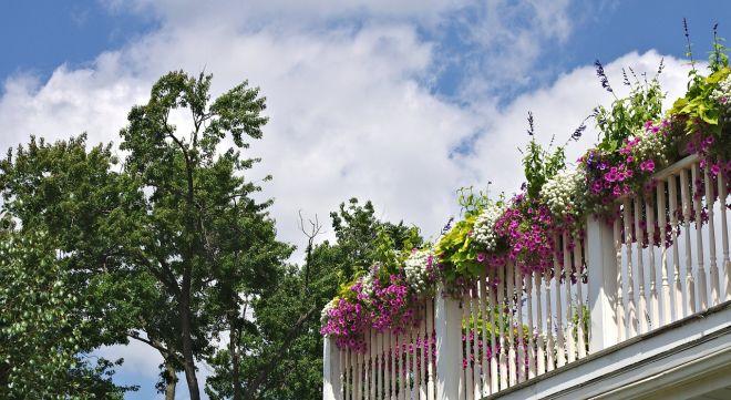 výběr květin na terasu