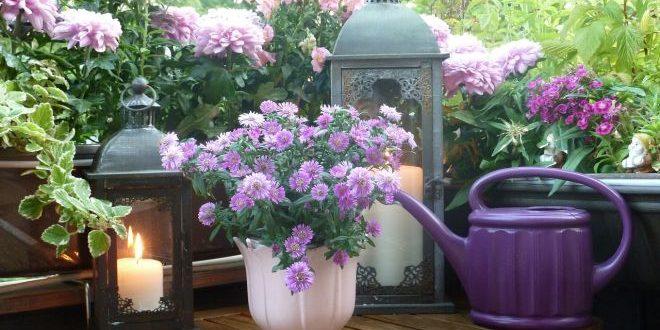 Květy na balkónech a parapetech? Bez problému